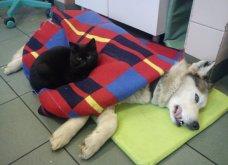 Cat story: Η μαύρη γάτα που ξεγέλασε τον Χάρο και έγινε νοσοκόμα...  - Κυρίως Φωτογραφία - Gallery - Video 4