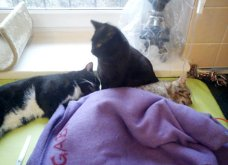 Cat story: Η μαύρη γάτα που ξεγέλασε τον Χάρο και έγινε νοσοκόμα...  - Κυρίως Φωτογραφία - Gallery - Video 5