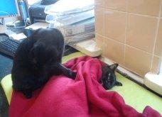 Cat story: Η μαύρη γάτα που ξεγέλασε τον Χάρο και έγινε νοσοκόμα...  - Κυρίως Φωτογραφία - Gallery - Video 6