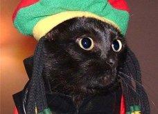 22 + 1 έξαλλες γάτες με κοστούμια του Halloween θα προτιμούσαν να εκλείψει αυτή η γιορτή - Κυρίως Φωτογραφία - Gallery - Video