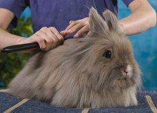 Αυτά είναι τα πιο κακομαθημένα γατιά, σκυλάκια & κουνελάκια: Εξωφρενικά αξεσουάρ & χλιδάτες περιποιήσεις  - Κυρίως Φωτογραφία - Gallery - Video