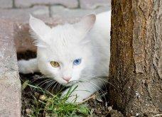 Πάμε ένα χαδιάρικο: Πανέμορφες γάτες με διαφορετικό χρώμα στα μάτια! - Κυρίως Φωτογραφία - Gallery - Video