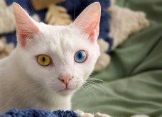 Πάμε ένα χαδιάρικο: Πανέμορφες γάτες με διαφορετικό χρώμα στα μάτια! - Κυρίως Φωτογραφία - Gallery - Video 12