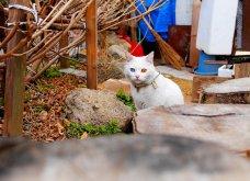 Πάμε ένα χαδιάρικο: Πανέμορφες γάτες με διαφορετικό χρώμα στα μάτια! - Κυρίως Φωτογραφία - Gallery - Video 5