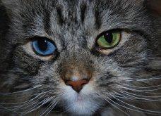 Πάμε ένα χαδιάρικο: Πανέμορφες γάτες με διαφορετικό χρώμα στα μάτια! - Κυρίως Φωτογραφία - Gallery - Video 9
