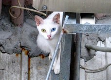 Πάμε ένα χαδιάρικο: Πανέμορφες γάτες με διαφορετικό χρώμα στα μάτια! - Κυρίως Φωτογραφία - Gallery - Video 11