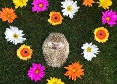 Ο Huff είναι ο πιο αξιολάτρευτος πανάσχημος σκαντζόχοιρος: Superstar του instagram &... ψυχοθεραπευτής - Κυρίως Φωτογραφία - Gallery - Video 5