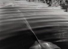 Christopher Swann: Πέρασε 25 χρόνια στην θάλασσα για να τραβήξει τις ομορφότερες φωτογραφίες φαλαινών - Κυρίως Φωτογραφία - Gallery - Video