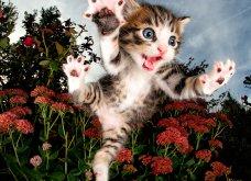 "Smile pics: Χαριτωμένα μικρά γατάκια στις πιο ""ιπτάμενες"" πόζες που θα δείτε ποτέ - Κυρίως Φωτογραφία - Gallery - Video"