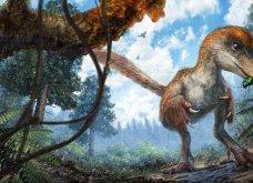 Απίστευτη Ανακάλυψη: Τέλεια ουρά δεινοσαύρου 99 εκατ. ετών πάνω σε δέντρο - Κυρίως Φωτογραφία - Gallery - Video 3