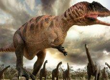 Απίστευτη Ανακάλυψη: Τέλεια ουρά δεινοσαύρου 99 εκατ. ετών πάνω σε δέντρο - Κυρίως Φωτογραφία - Gallery - Video