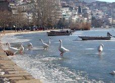 Μαγευτικά στιγμιότυπα: Οι παγωμένες λίμνες της Πρέσπας & της Καστοριάς σε απίθανα κλικς - Κυρίως Φωτογραφία - Gallery - Video 10