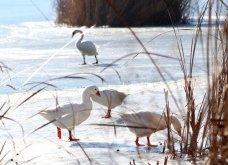 Μαγευτικά στιγμιότυπα: Οι παγωμένες λίμνες της Πρέσπας & της Καστοριάς σε απίθανα κλικς - Κυρίως Φωτογραφία - Gallery - Video 11