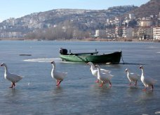 Μαγευτικά στιγμιότυπα: Οι παγωμένες λίμνες της Πρέσπας & της Καστοριάς σε απίθανα κλικς - Κυρίως Φωτογραφία - Gallery - Video 13