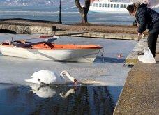 Μαγευτικά στιγμιότυπα: Οι παγωμένες λίμνες της Πρέσπας & της Καστοριάς σε απίθανα κλικς - Κυρίως Φωτογραφία - Gallery - Video 14
