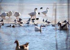 Μαγευτικά στιγμιότυπα: Οι παγωμένες λίμνες της Πρέσπας & της Καστοριάς σε απίθανα κλικς - Κυρίως Φωτογραφία - Gallery - Video 7