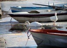 Μαγευτικά στιγμιότυπα: Οι παγωμένες λίμνες της Πρέσπας & της Καστοριάς σε απίθανα κλικς - Κυρίως Φωτογραφία - Gallery - Video 8