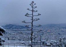 Το χιόνι έντυσε στα λευκά όλη την Αττική (φωτό) - Δείτε πού υπάρχουν προβλήματα στους δρόμους - Κυρίως Φωτογραφία - Gallery - Video 5