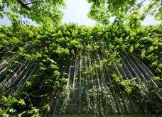 Το πιο πράσινο ξενοδοχείο στον κόσμο ! Κρεμαστοί κήποι κατάφυτοι όλοι οι τοίχοι του - Δείτε φωτό - Κυρίως Φωτογραφία - Gallery - Video 8