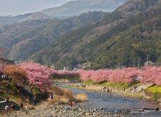 Ας υποδεχθούμε την Άνοιξη με ένα ταξίδι στην Ιαπωνία όπου άνθισαν οι κερασιές - Ροζ τοπία του ονείρου στην Kawazu - Κυρίως Φωτογραφία - Gallery - Video