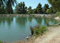 """Η """"μυστική"""" λίμνη Μπελέτσι βρίσκεται στην Αθήνα & μοιάζει εξωτική: Με πάπιες & καταπράσινο τοπίο - Δείτε φωτό & βίντεο - Κυρίως Φωτογραφία - Gallery - Video 8"""