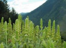 Αποκλειστικό: Made in Greece το τσάι Tuvunu: Το υγιεινό ελληνικό τσάι του βουνού κρύο ή ζεστό έγινε διεθνές success story στα Readytodrink ποτά - Κυρίως Φωτογραφία - Gallery - Video 2