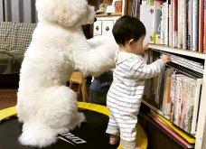 Αυτό το τρισχαριτωμένο Γιαπωνεζάκι και ο σκυλάκος της θα σας φτιάξουν την μέρα – φωτό - Κυρίως Φωτογραφία - Gallery - Video 11