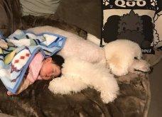 Αυτό το τρισχαριτωμένο Γιαπωνεζάκι και ο σκυλάκος της θα σας φτιάξουν την μέρα – φωτό - Κυρίως Φωτογραφία - Gallery - Video 16