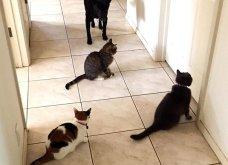 Ξεκαρδιστικές φωτό μοιράζονται με τους φίλους τα ξετρελαμένα αφεντικά γάτων & σκύλων - Κυρίως Φωτογραφία - Gallery - Video 3