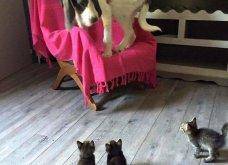 Ξεκαρδιστικές φωτό μοιράζονται με τους φίλους τα ξετρελαμένα αφεντικά γάτων & σκύλων - Κυρίως Φωτογραφία - Gallery - Video 2
