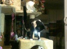 Ξεκαρδιστικές φωτό μοιράζονται με τους φίλους τα ξετρελαμένα αφεντικά γάτων & σκύλων - Κυρίως Φωτογραφία - Gallery - Video 4