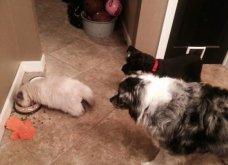 Ξεκαρδιστικές φωτό μοιράζονται με τους φίλους τα ξετρελαμένα αφεντικά γάτων & σκύλων - Κυρίως Φωτογραφία - Gallery - Video 5