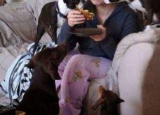 Ξεκαρδιστικές φωτό μοιράζονται με τους φίλους τα ξετρελαμένα αφεντικά γάτων & σκύλων - Κυρίως Φωτογραφία - Gallery - Video 7