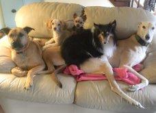 Ξεκαρδιστικές φωτό μοιράζονται με τους φίλους τα ξετρελαμένα αφεντικά γάτων & σκύλων - Κυρίως Φωτογραφία - Gallery - Video 8