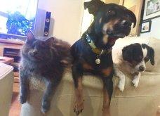 Ξεκαρδιστικές φωτό μοιράζονται με τους φίλους τα ξετρελαμένα αφεντικά γάτων & σκύλων - Κυρίως Φωτογραφία - Gallery - Video 11