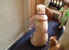 Ξεκαρδιστικές φωτό μοιράζονται με τους φίλους τα ξετρελαμένα αφεντικά γάτων & σκύλων - Κυρίως Φωτογραφία - Gallery - Video 12