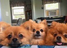 Ξεκαρδιστικές φωτό μοιράζονται με τους φίλους τα ξετρελαμένα αφεντικά γάτων & σκύλων - Κυρίως Φωτογραφία - Gallery - Video