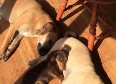 Ξεκαρδιστικές φωτό μοιράζονται με τους φίλους τα ξετρελαμένα αφεντικά γάτων & σκύλων - Κυρίως Φωτογραφία - Gallery - Video 14