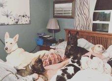 Ξεκαρδιστικές φωτό μοιράζονται με τους φίλους τα ξετρελαμένα αφεντικά γάτων & σκύλων - Κυρίως Φωτογραφία - Gallery - Video 15