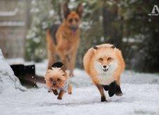 Ξεκαρδιστικές φωτό μοιράζονται με τους φίλους τα ξετρελαμένα αφεντικά γάτων & σκύλων - Κυρίως Φωτογραφία - Gallery - Video 16
