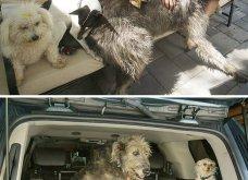 Ξεκαρδιστικές φωτό μοιράζονται με τους φίλους τα ξετρελαμένα αφεντικά γάτων & σκύλων - Κυρίως Φωτογραφία - Gallery - Video 30