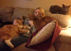 Ξεκαρδιστικές φωτό μοιράζονται με τους φίλους τα ξετρελαμένα αφεντικά γάτων & σκύλων - Κυρίως Φωτογραφία - Gallery - Video 31