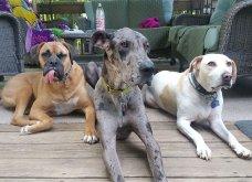 Ξεκαρδιστικές φωτό μοιράζονται με τους φίλους τα ξετρελαμένα αφεντικά γάτων & σκύλων - Κυρίως Φωτογραφία - Gallery - Video 33