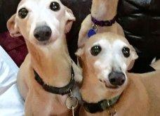 Ξεκαρδιστικές φωτό μοιράζονται με τους φίλους τα ξετρελαμένα αφεντικά γάτων & σκύλων - Κυρίως Φωτογραφία - Gallery - Video 19