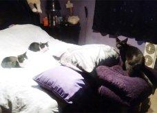 Ξεκαρδιστικές φωτό μοιράζονται με τους φίλους τα ξετρελαμένα αφεντικά γάτων & σκύλων - Κυρίως Φωτογραφία - Gallery - Video 20