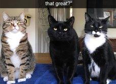 Ξεκαρδιστικές φωτό μοιράζονται με τους φίλους τα ξετρελαμένα αφεντικά γάτων & σκύλων - Κυρίως Φωτογραφία - Gallery - Video 21