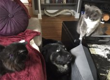 Ξεκαρδιστικές φωτό μοιράζονται με τους φίλους τα ξετρελαμένα αφεντικά γάτων & σκύλων - Κυρίως Φωτογραφία - Gallery - Video 26