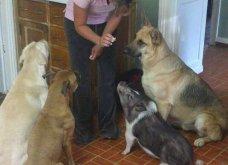 Ξεκαρδιστικές φωτό μοιράζονται με τους φίλους τα ξετρελαμένα αφεντικά γάτων & σκύλων - Κυρίως Φωτογραφία - Gallery - Video 29