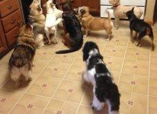 Ξεκαρδιστικές φωτό μοιράζονται με τους φίλους τα ξετρελαμένα αφεντικά γάτων & σκύλων - Κυρίως Φωτογραφία - Gallery - Video 37