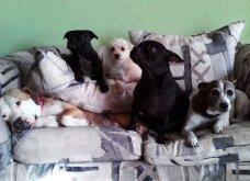 Ξεκαρδιστικές φωτό μοιράζονται με τους φίλους τα ξετρελαμένα αφεντικά γάτων & σκύλων - Κυρίως Φωτογραφία - Gallery - Video 38